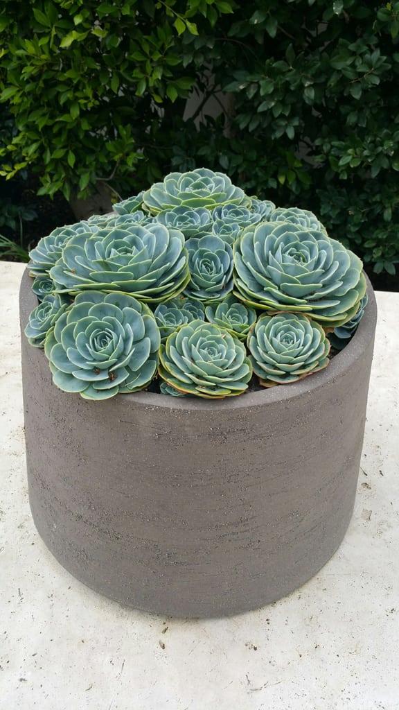 designer landscaping succulents